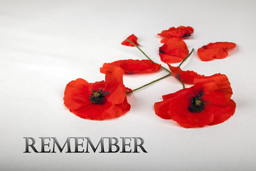 Poppies - for Remembrance Day - Remember