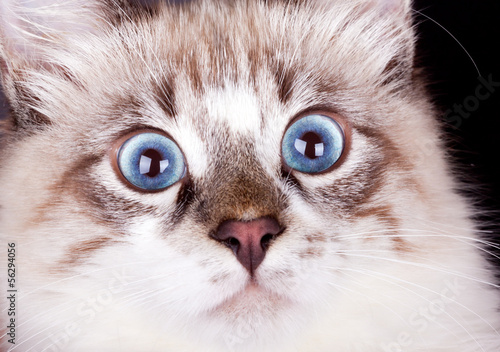 young frightened cat
