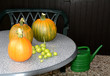 Kürbisse und grüne Tomaten