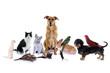 canvas print picture - Haustiere – Hund, Katze, Maus...