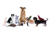 Haustiere – Hund, Katze, Maus...