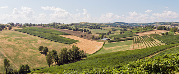 Small valley of vineyards in the region of Modena, Italy