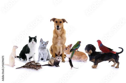 canvas print picture Haustiere – Hund, Katze, Maus...