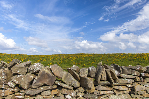 Stone wall in front of a yellow flowered meadow