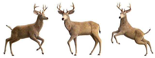 Hirsch oder Rehbock in verschiedenen Posen 2