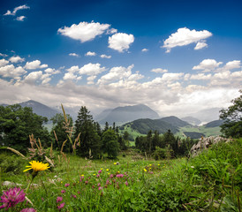 Schweizer Almwiese