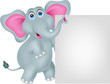 funny elephant cartoon with blank sign