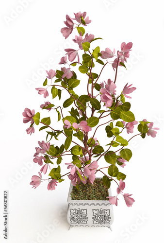 Houseplant with Pink Flowers in 3D