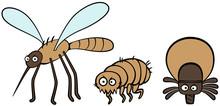 Pasożyty komarów pcheł i kleszczy