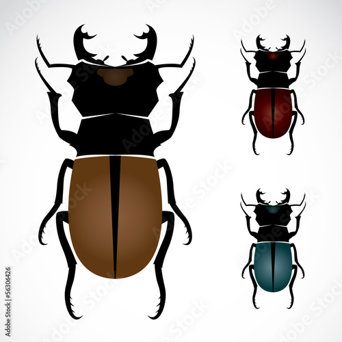 Stag beetle, the largest beetle