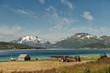 Summer at Lofoten in northern Norway