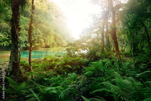 Poster Bossen Mysterious Mayan jungle in the national park Semuc Champey Guate