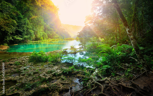 Poster Centraal-Amerika Landen Sunny morning in the mountainous jungle of the national park Sem