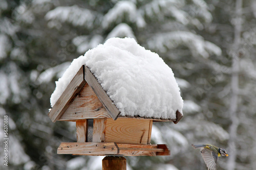 Birds at wooden bird feeder with snow during the Winter