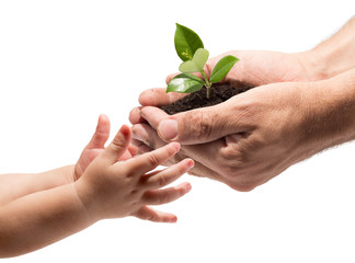 hands of a child taking a plant from the hands of a man