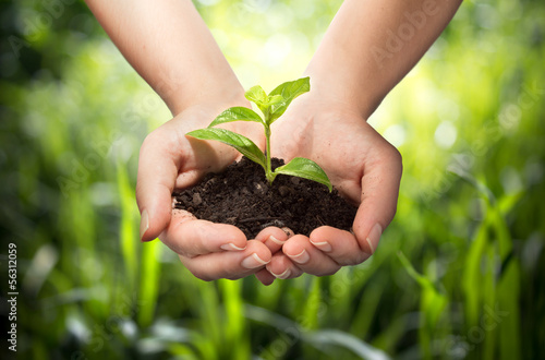 canvas print picture plant in hands - grass background