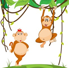 couple monkey