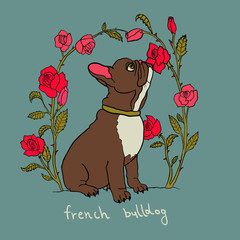 French bulldog with rose flowers