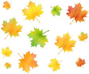 Ahorn Blätter Set