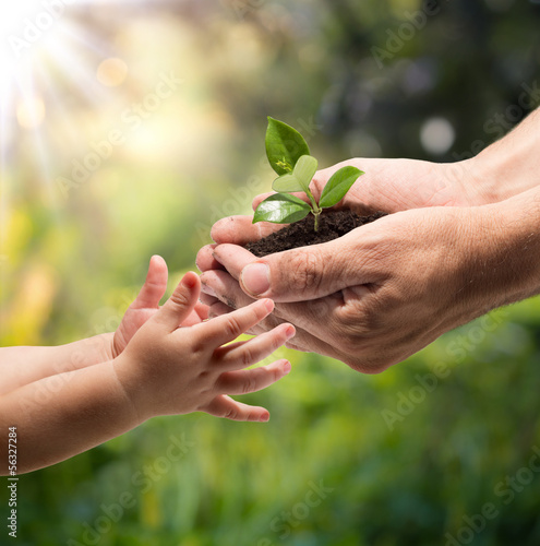 hands of a child taking a plant from the hands of a man - garden