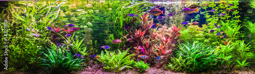 Ttropical freshwater aquarium with fishes - 56327819
