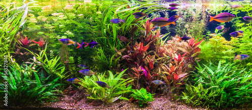 Ttropical freshwater aquarium with fishes - 56327844