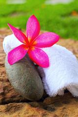 Frangipani flowers - pink flowers and a white towel.