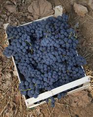 Cassetta con grappoli di uva