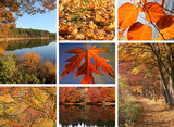 Herbstliche Collage