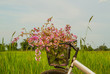 Bicycle in the rice field