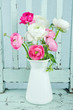 White and pink ranunculus flowers