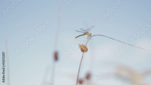 Dragonfly sitting upon cloudy sky side view, slow motion