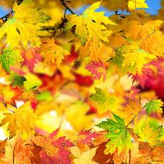 Herbstliche Karte mit bunten Blättern