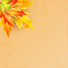autumn background.autumn maple leaves with drops of rain on a gr