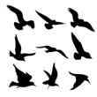 Flying Birds Silhouettes Illustration