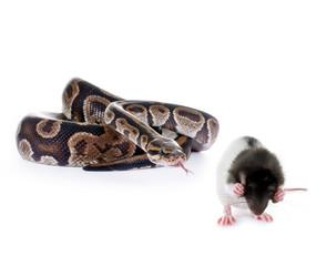 Schlangenfutter