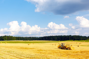 Harvesting in Summer on the field