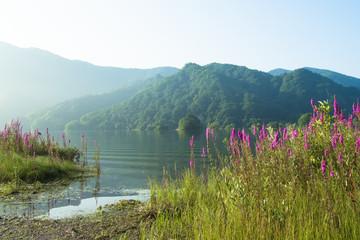 裏磐梯の秋元湖畔のミソハギ