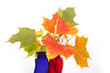 Bouquet of autumn leaves in bright colored vase on a white