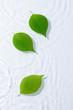水に浮かぶ新緑の葉っぱ