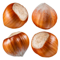 Hazelnut. Collection of nuts isolated on white
