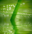 Water drops on green grass