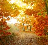Herbstpark. Spaziergang durch die Blätter