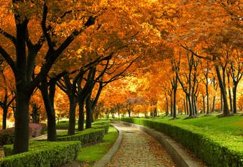 Park las jesienią