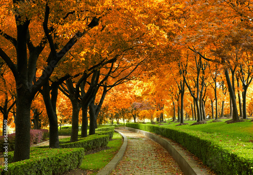 fototapeta na ścianę Autumn park
