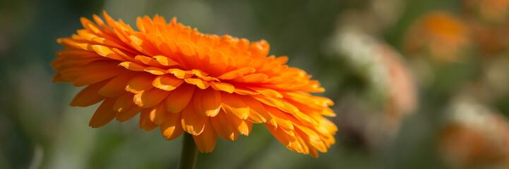 Orange flower banner