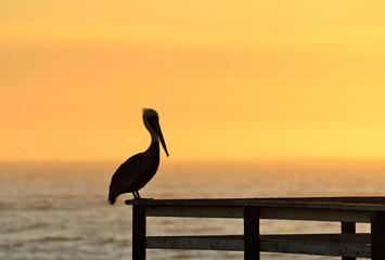 Pizmo Pelican