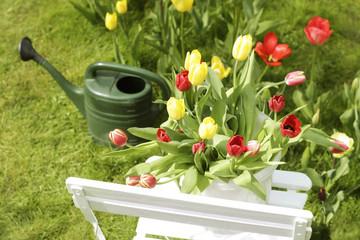 tulpen auf gartenstuhl mit gießkanne im hintergrund