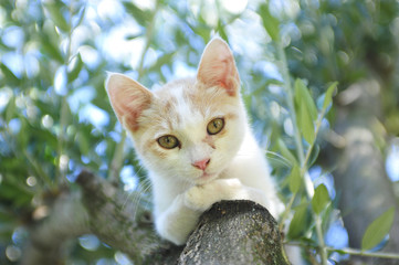 Kitten between the olives