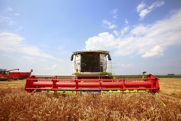 New combine harvester working in a wheat field
